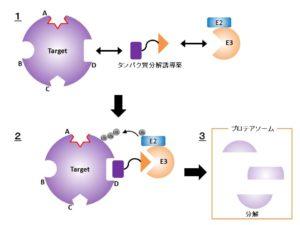 Protein Degrader