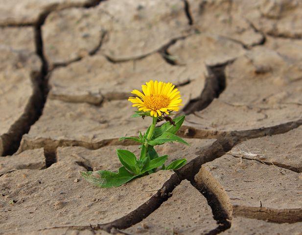 グローバル社会で生き残るためにプレゼンテーションに力を入れるべき3つの理由