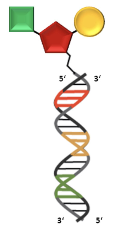compound with DNA