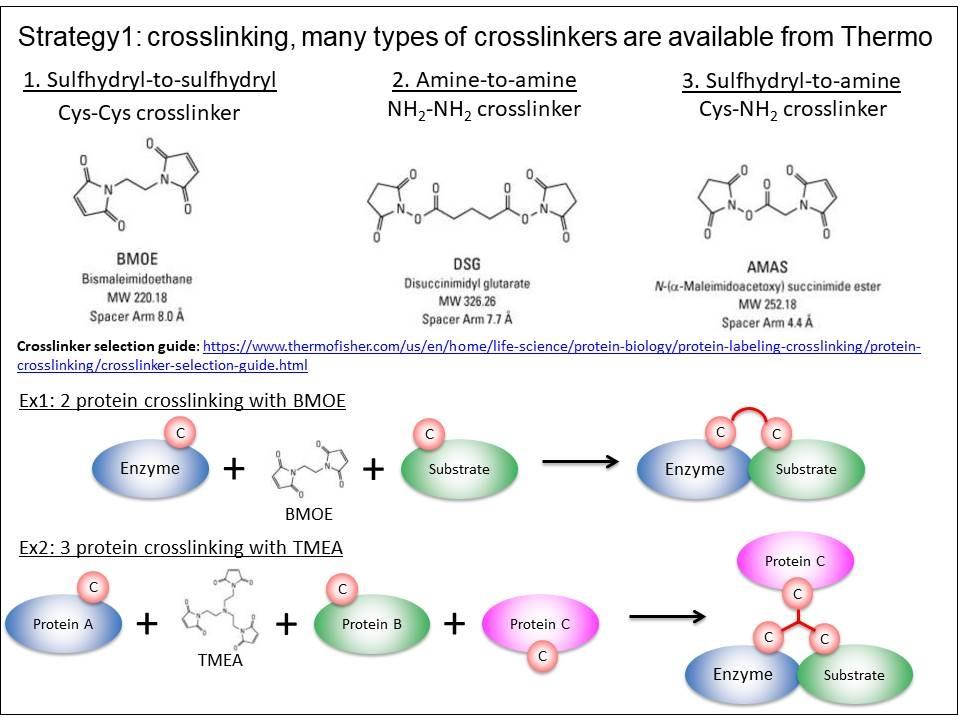 Crosslinking scheme