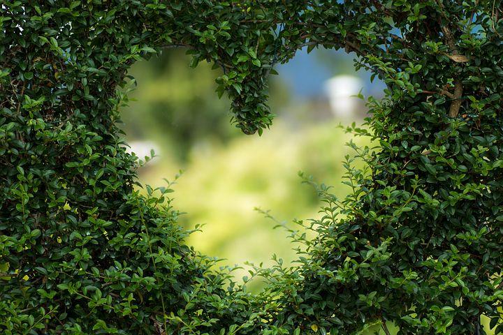 Heart green